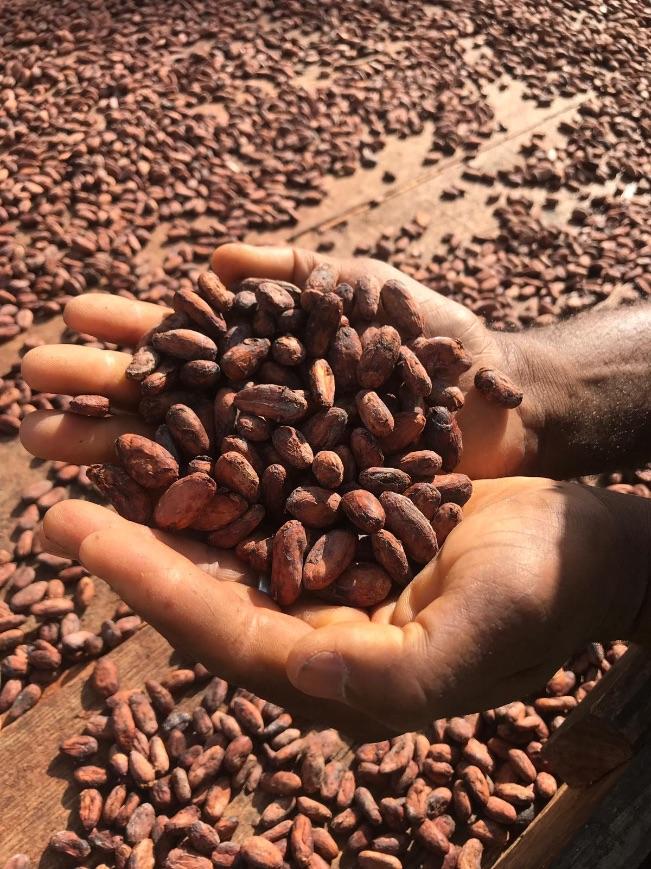 produzione-cioccolato-vestri