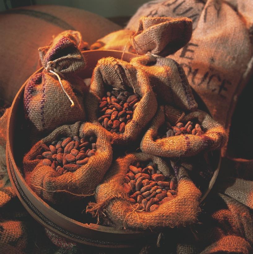 semi-cacao-vestri-cioccolato