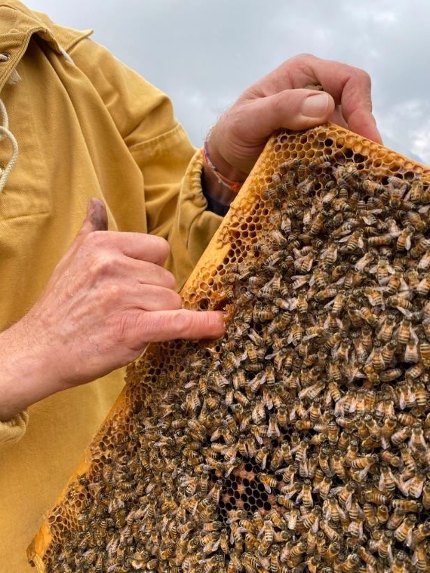 lavorazione-miele-apiario-mieli-thun