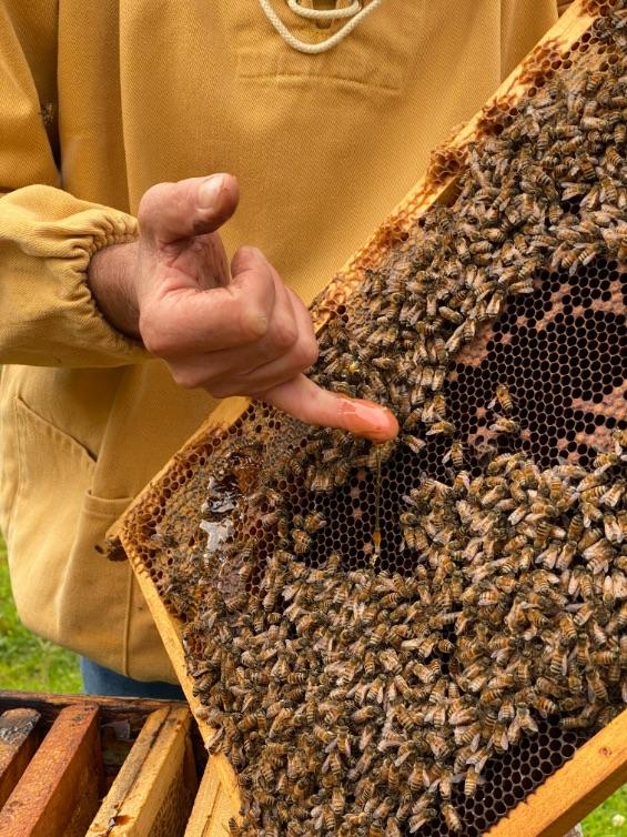 lavorazione-miele-melario-mieli-thun