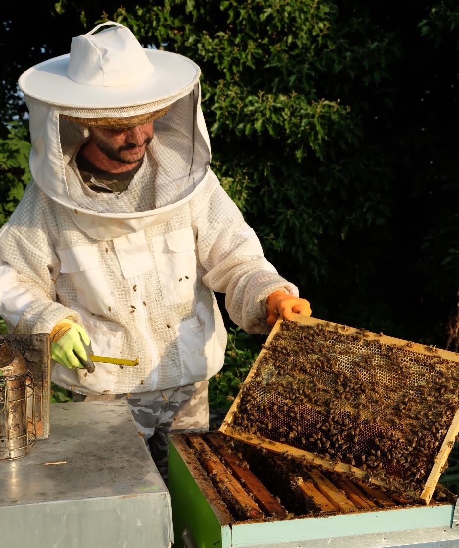 produzione-miele-storia-apicoltura-reggiana
