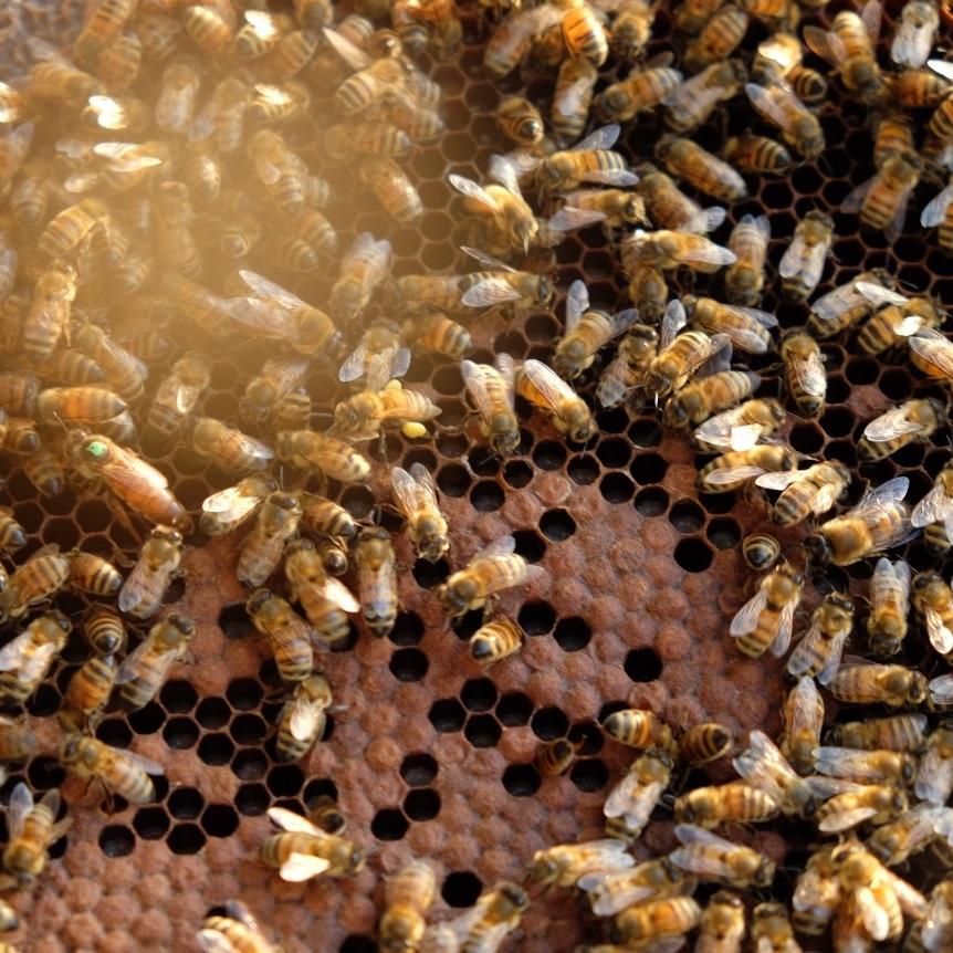 api-favo-come-si-fa-miele