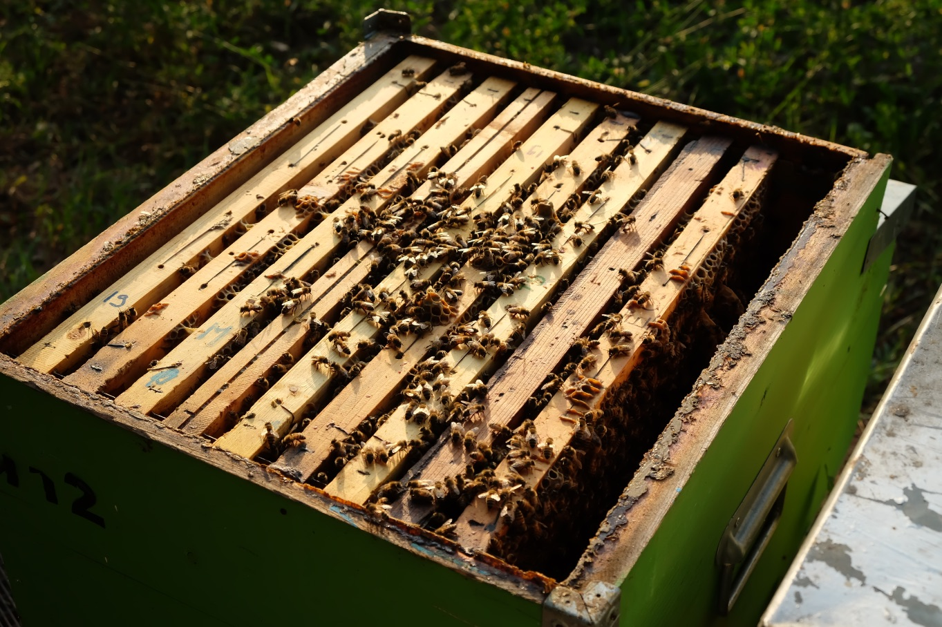arnia-spazio-d-ape-produzione-miele