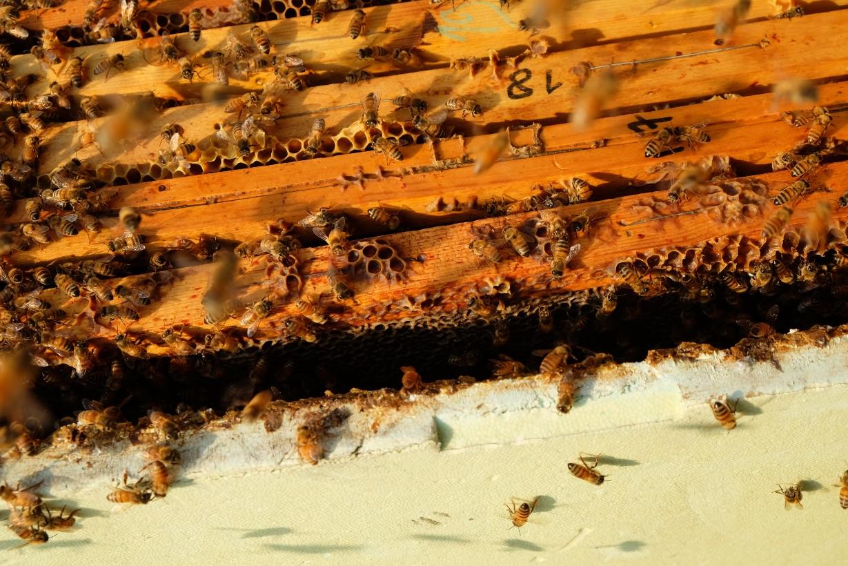 produzione-miele-arnia-spazio-d-ape
