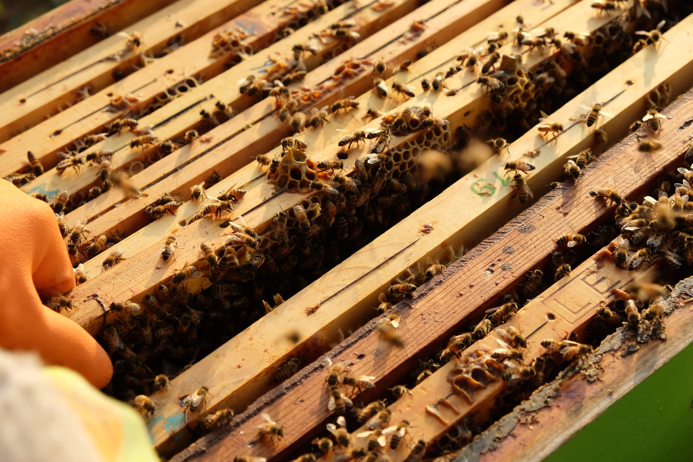 spazio-d-ape-apicoltura-reggiana-arnia-come-si-fa-il-miele