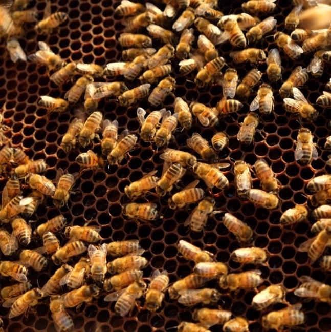 storia-miele-produzione-importanza-api-giornata-mondiale