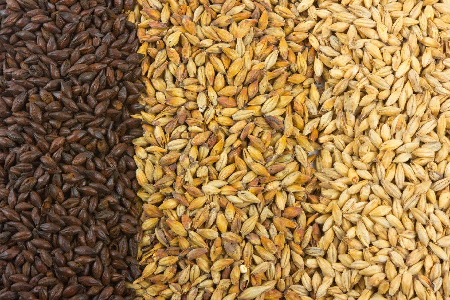 ingredienti-birra-malto-orzo