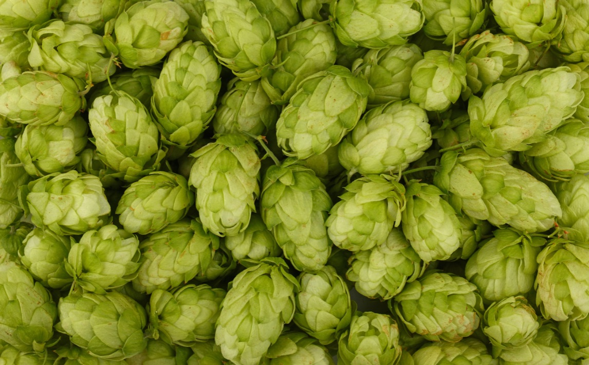 luppolo-birra-produzione-ingredienti